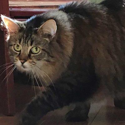 cat-homepage